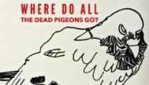 Where Do All the Dead Pigeons Go Ed2016